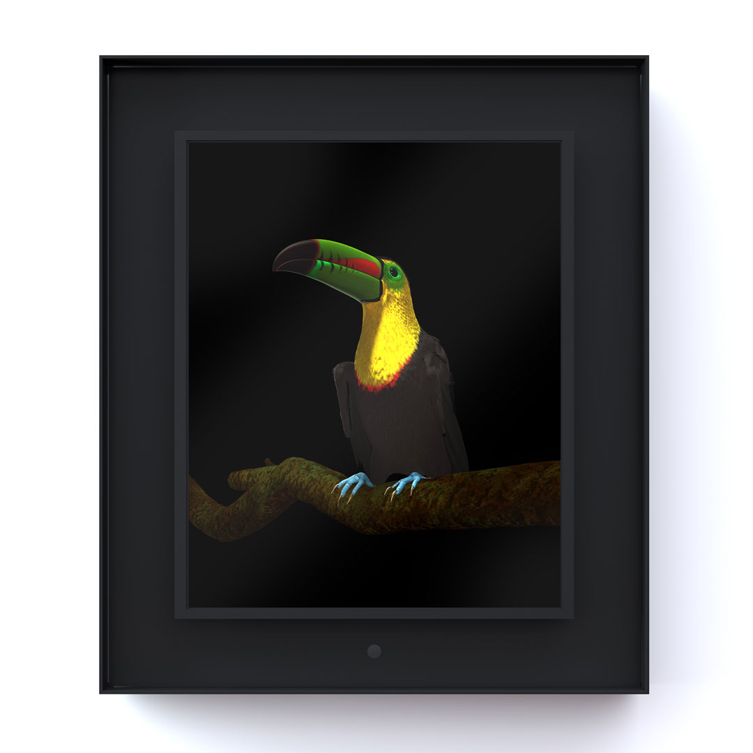 Ruffled: Keel-Billed Toucan