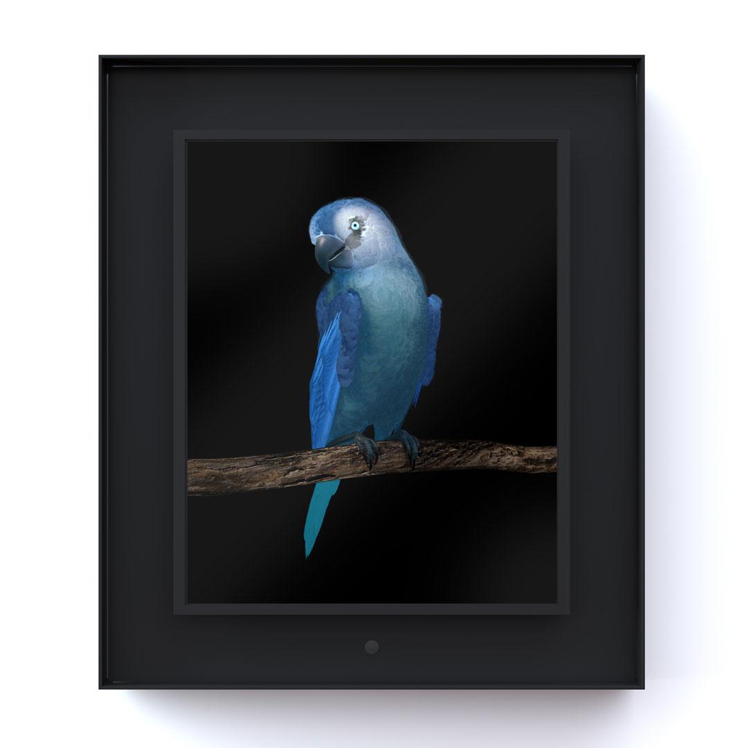 Ruffled: Spix Macaw
