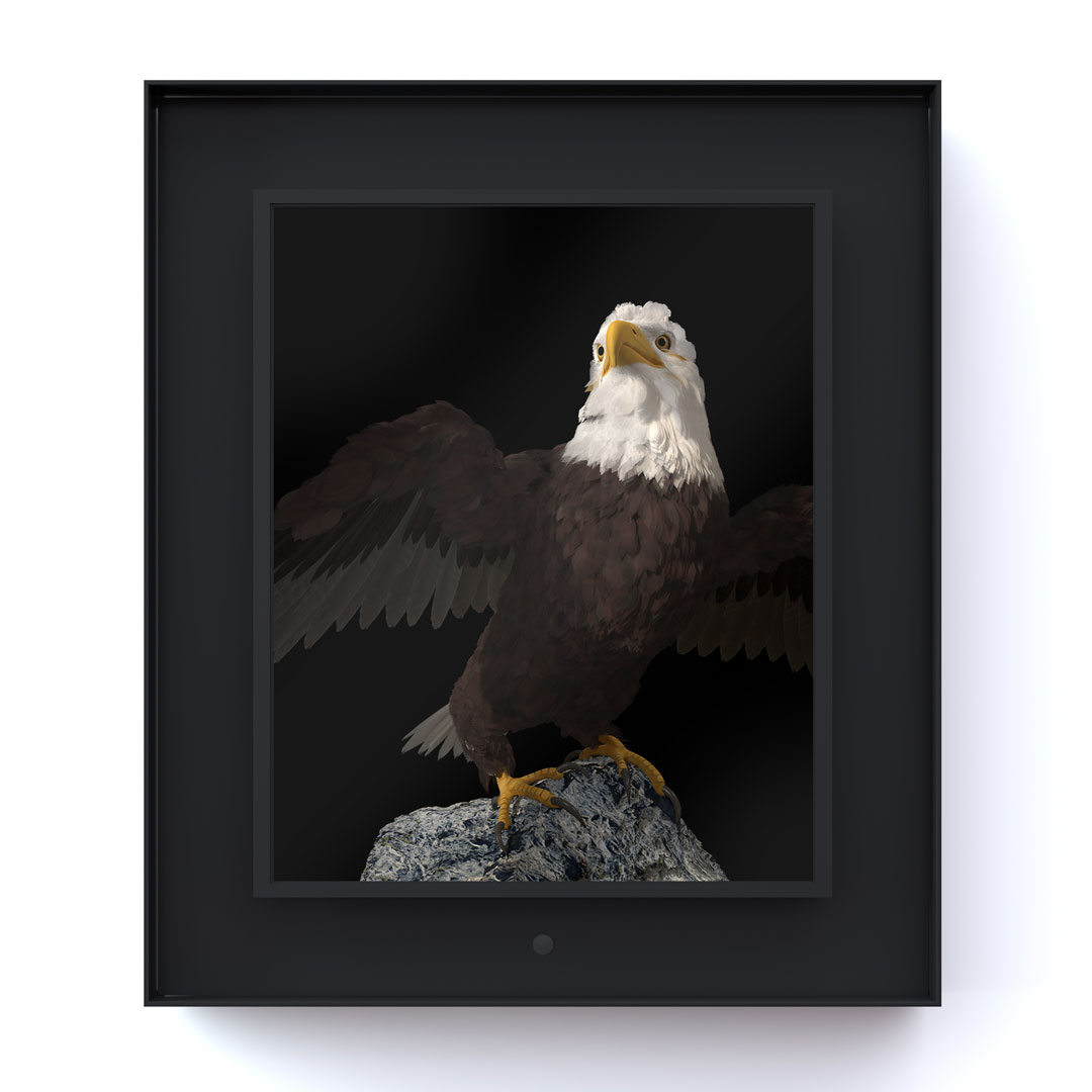 Ruffled: Bald Eagle