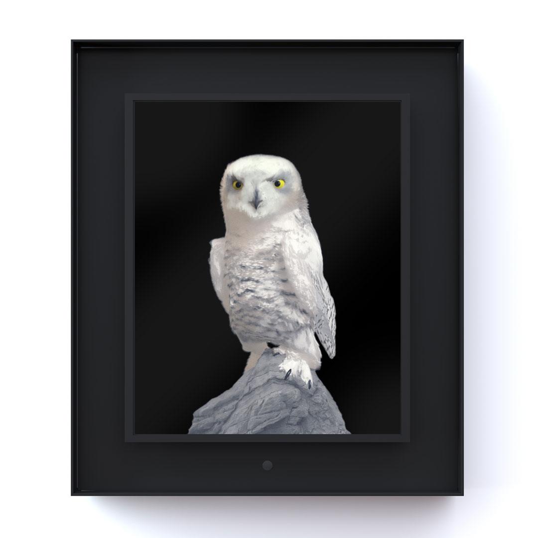 Ruffled: Snowy Owl