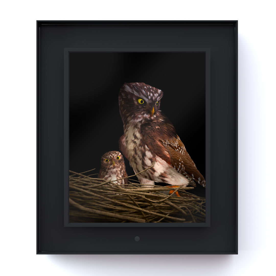 Ruffled: Pygmy Owl