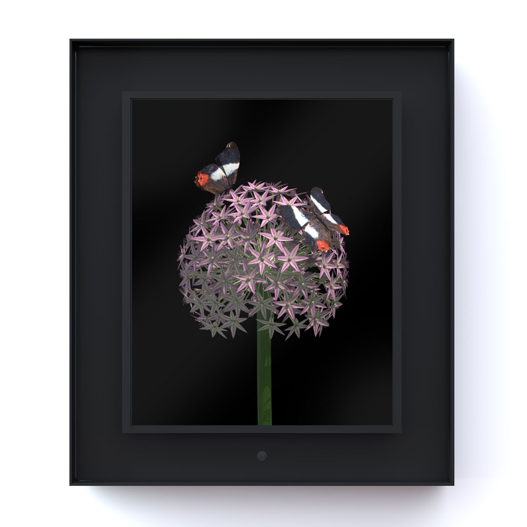 Bloomed: Allium