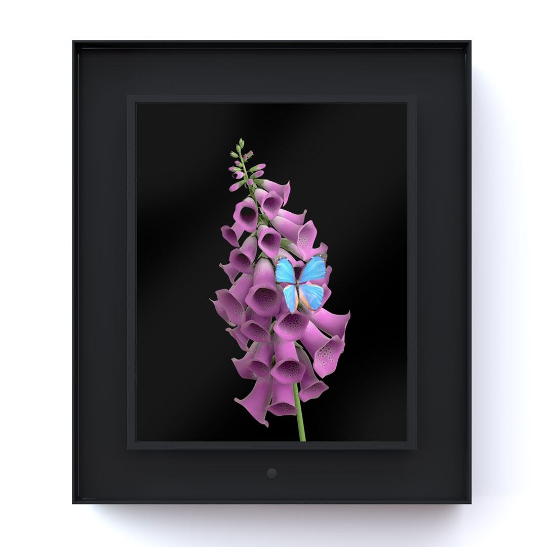 Bloomed: Foxglove