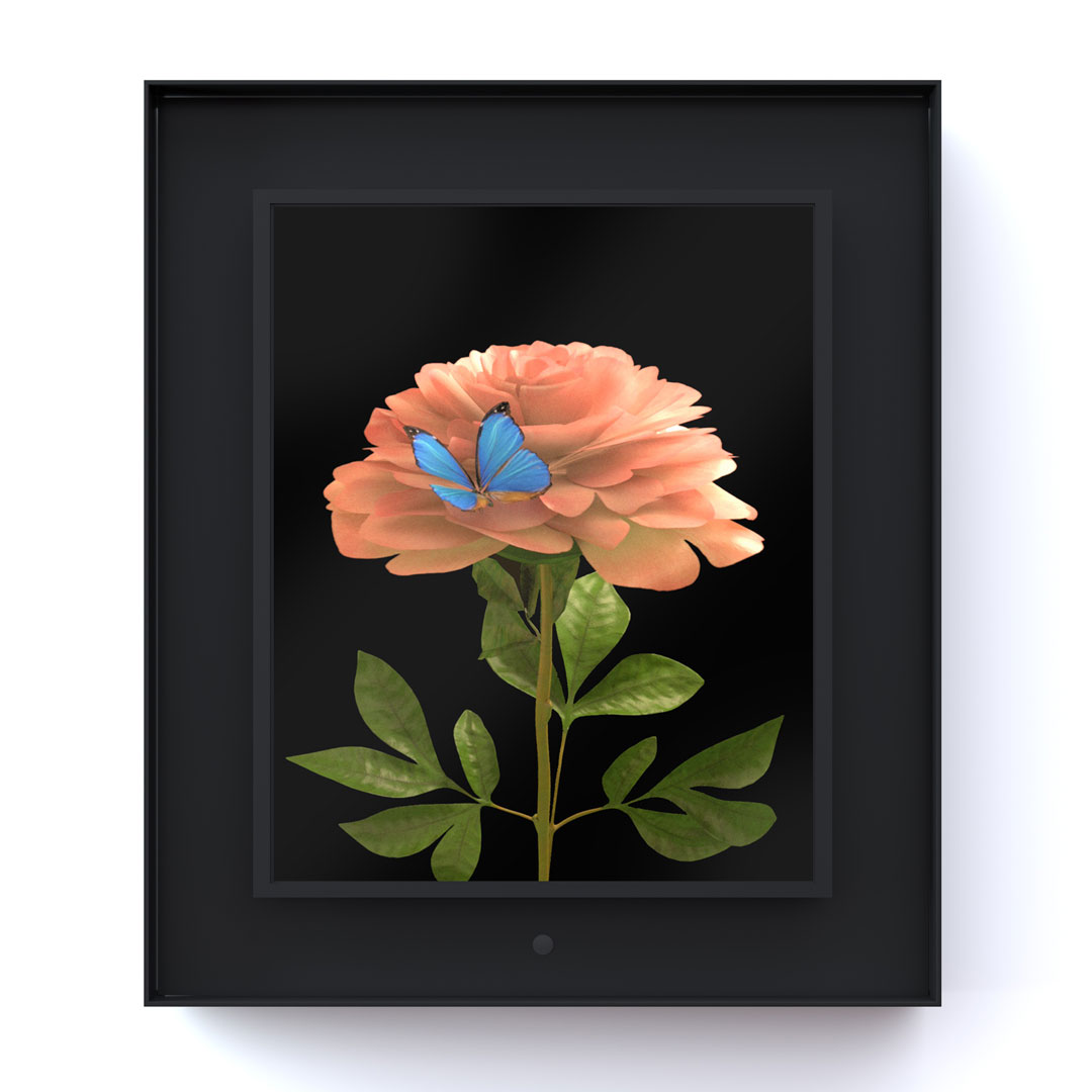 Bloomed: Peony