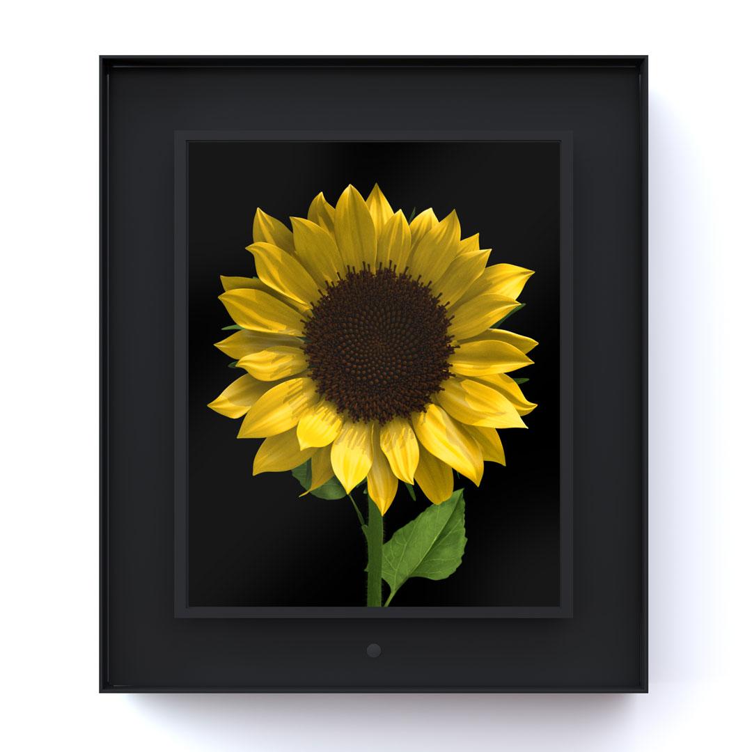 Bloomed: Sunflower