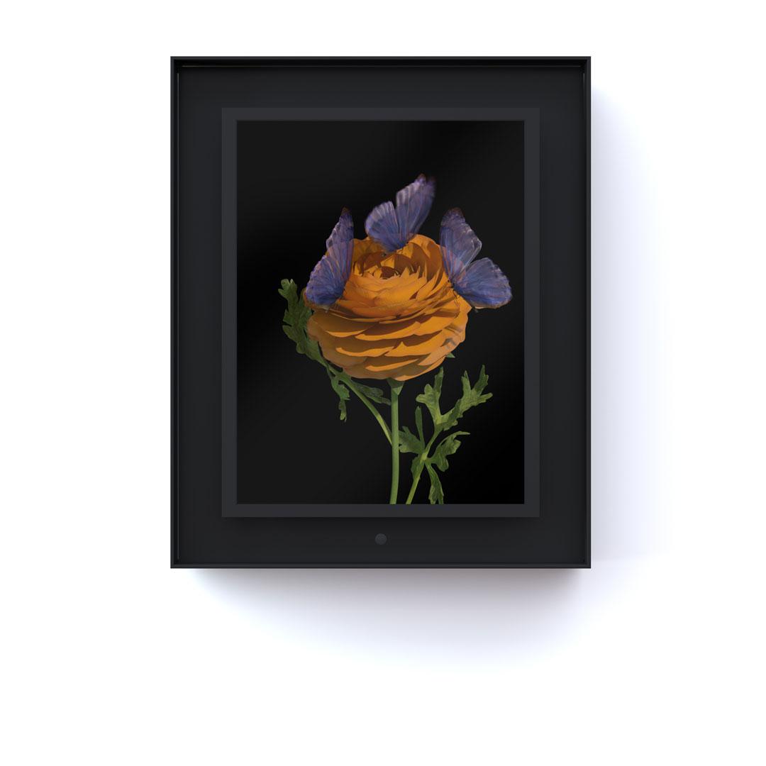 Bloomed: Ranunculus
