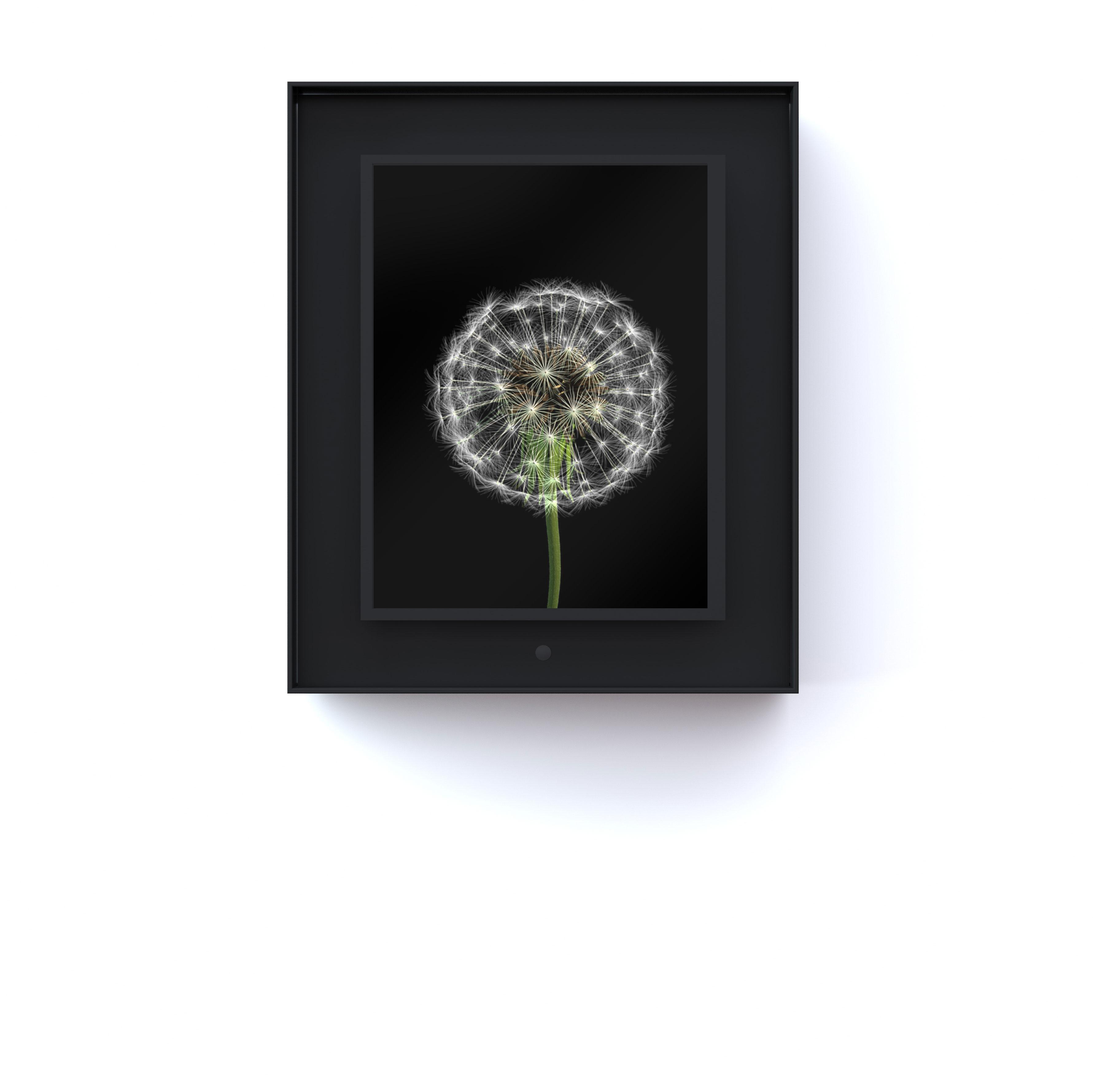 Bloomed: Dandelion