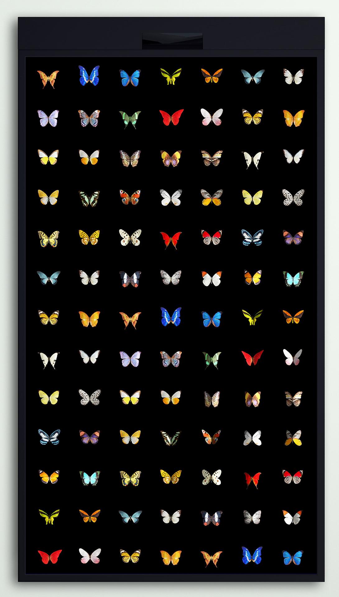 Flutter Wall