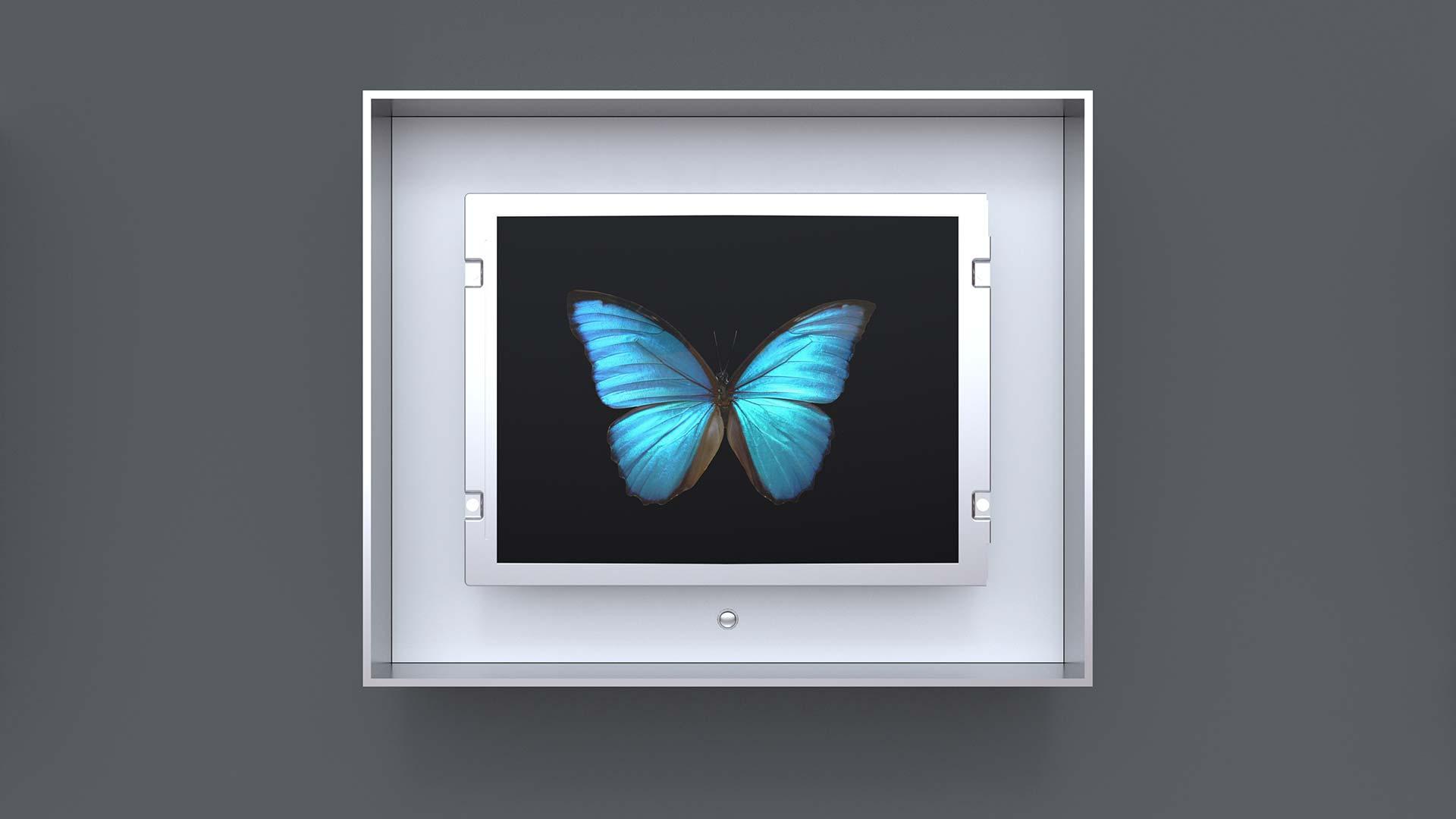 Baby Flutter: Blue Morpho Butterfly