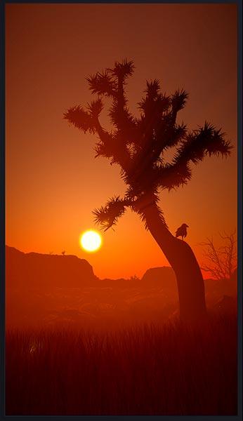 Deserted: Joshua Tree National Park