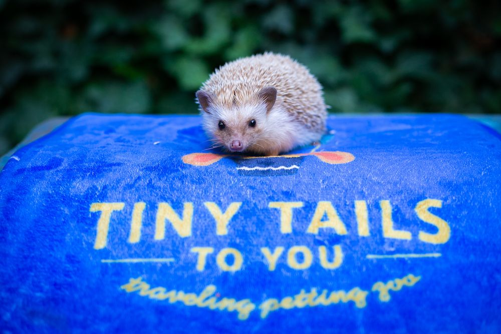 Tiny Tails to You staff
