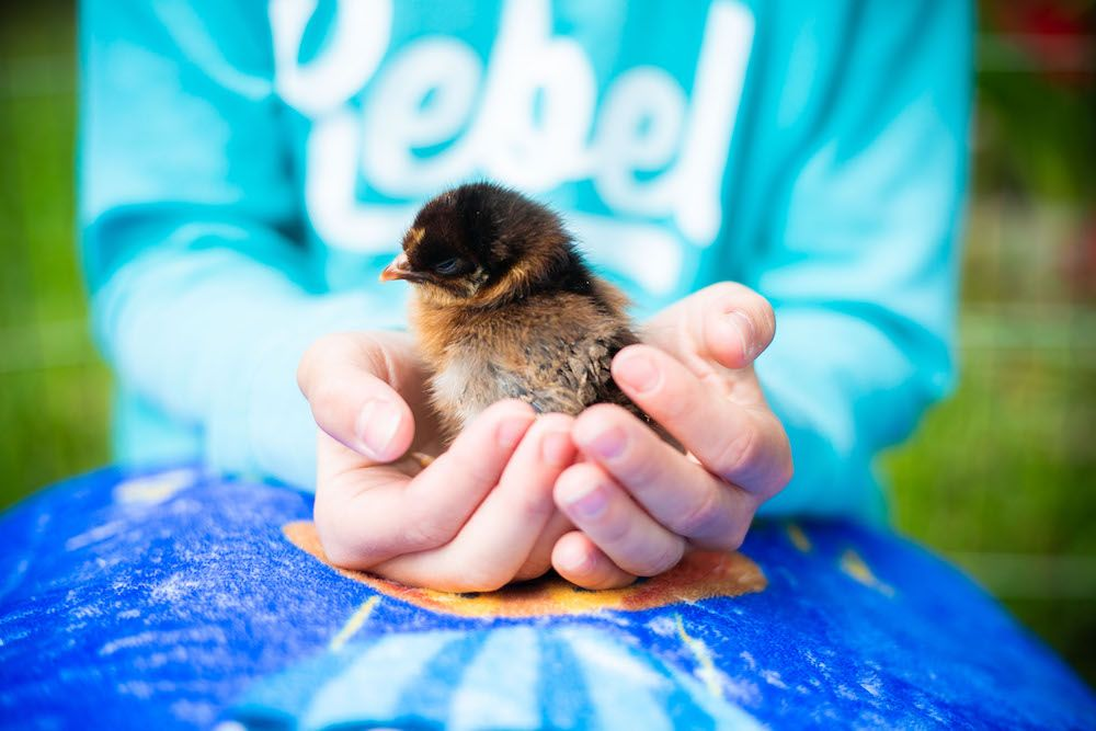 A small chick being held