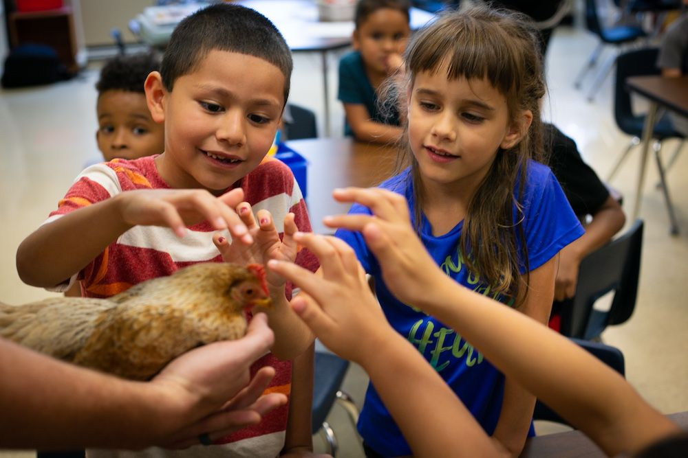 Children petting a chicken