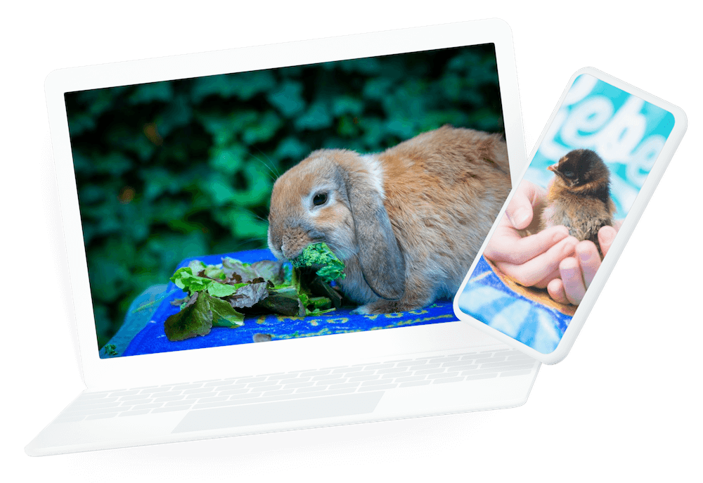 Animals on a computer and laptop