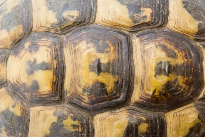 The Four Tortoise Chakras