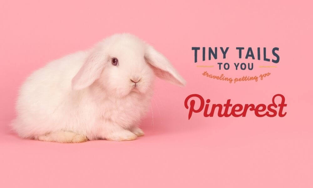 Find Animal Themed Activities for Kids on Pinterest