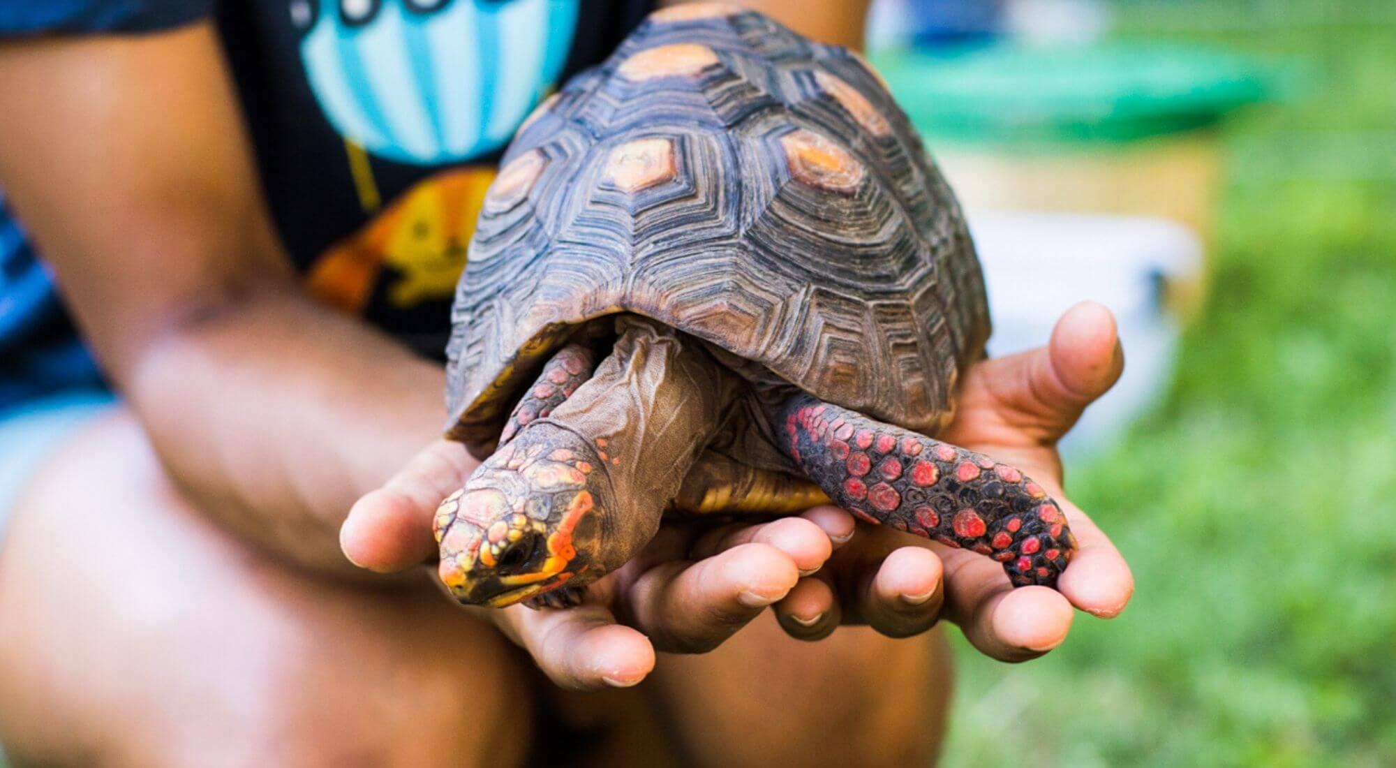 """Tiny Tunes: """"Mr. T the Tortoise"""""""