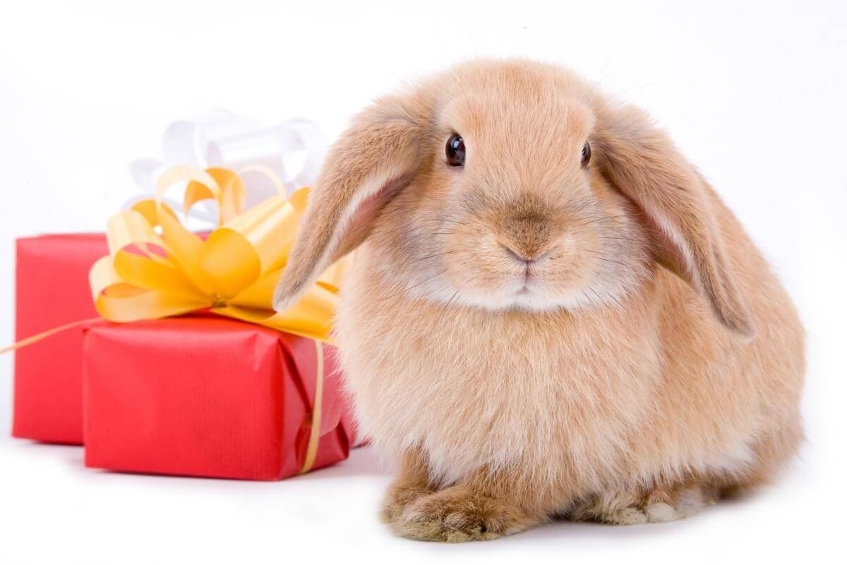 Surprise a co-worker or your special someone with a BunnyGram!