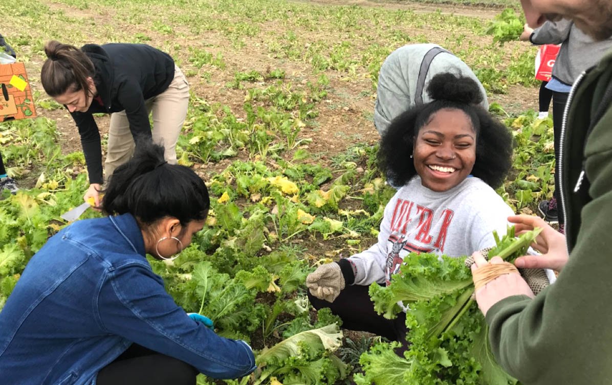 Students picking a garden