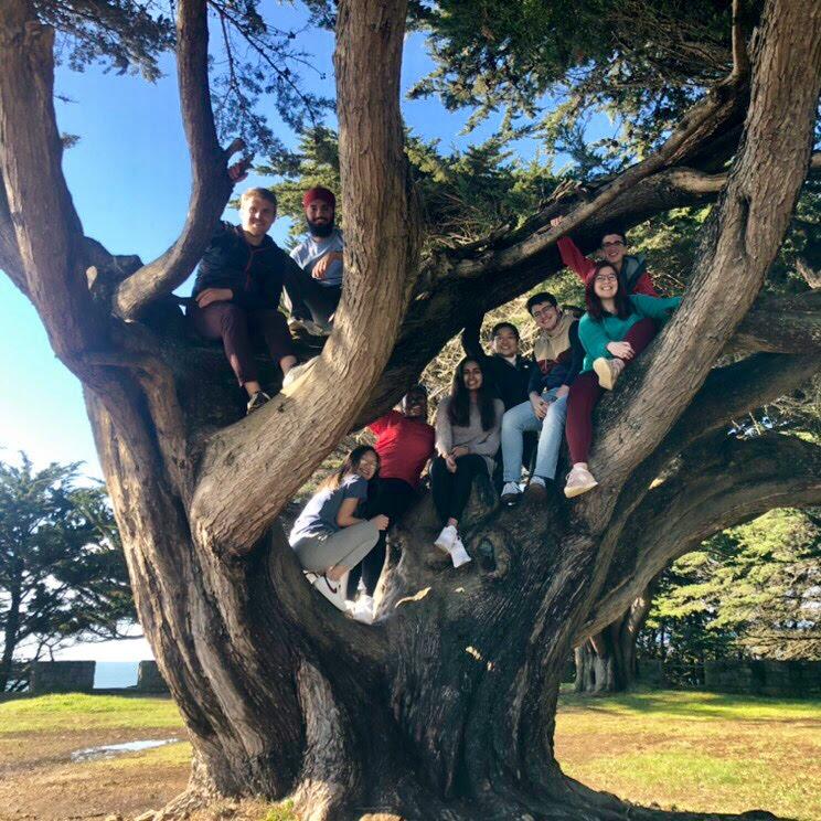 San Franscisco team in a tree