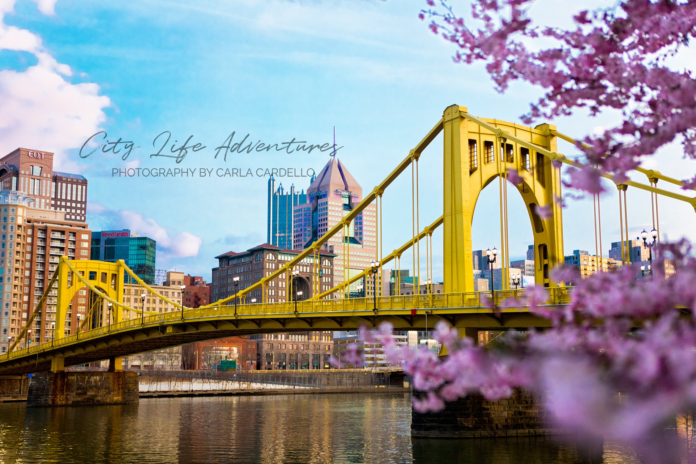 Cherry Blossoms in Pittsburgh