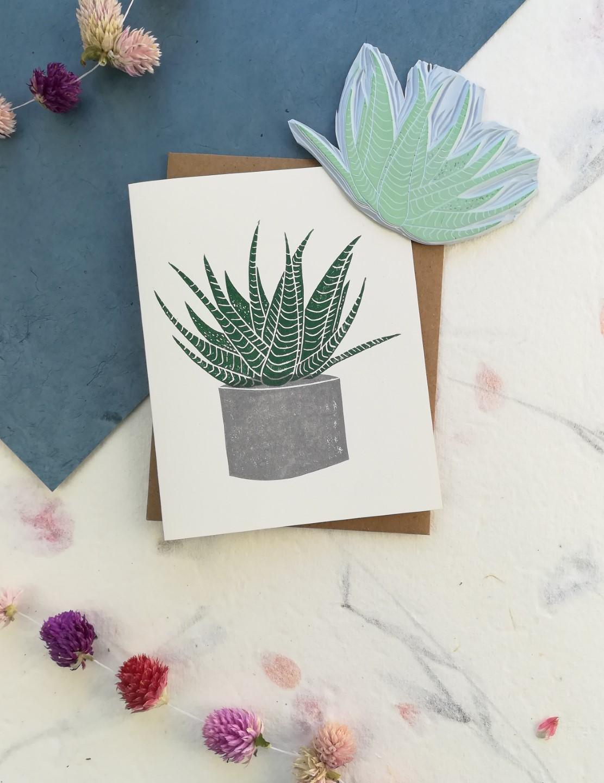 Haworthia Succulent Baby - Winter Pickle Press