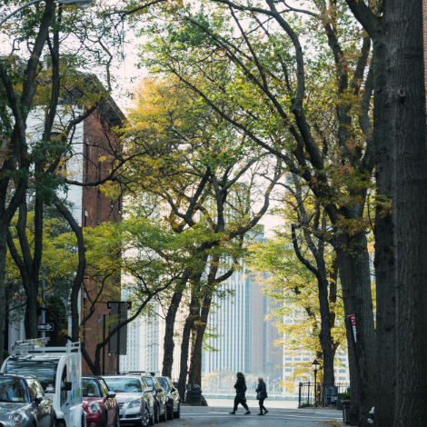 two people walking in brooklyn with trees