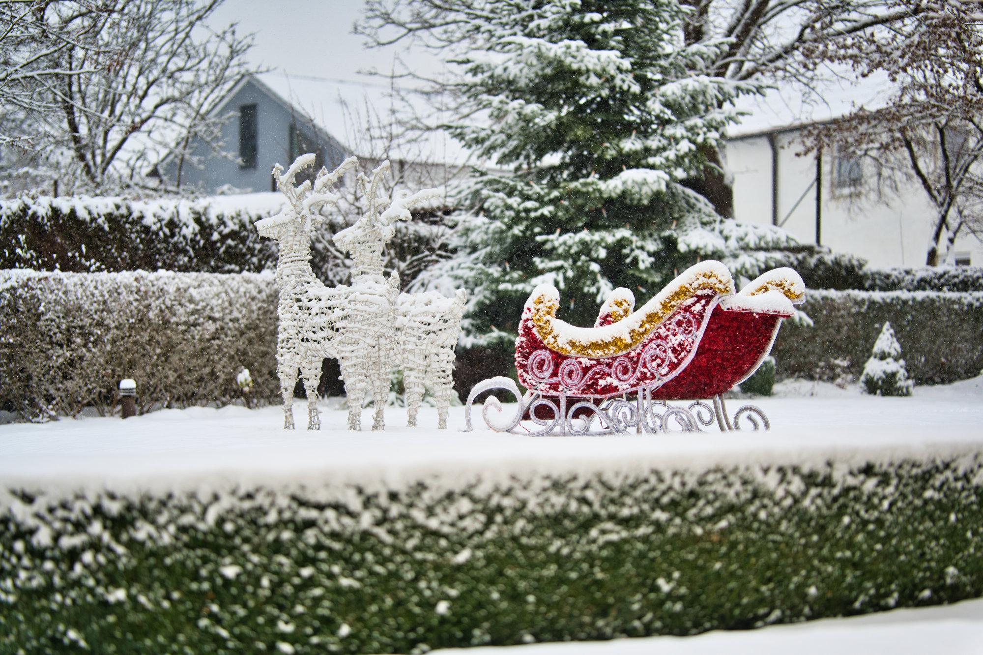 Reindeer in winter in the hotel garden