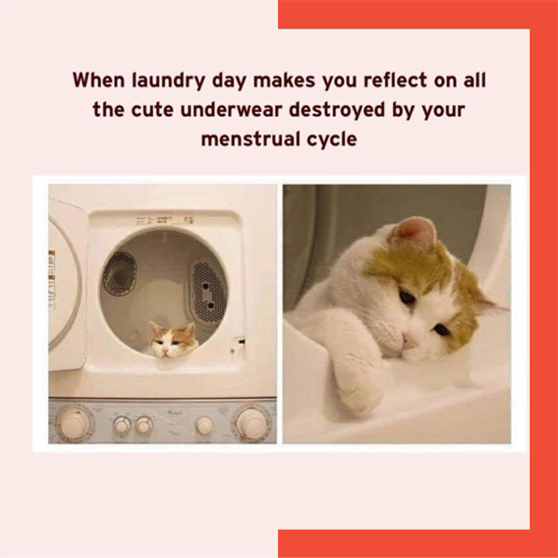 cat looking out of washing machine