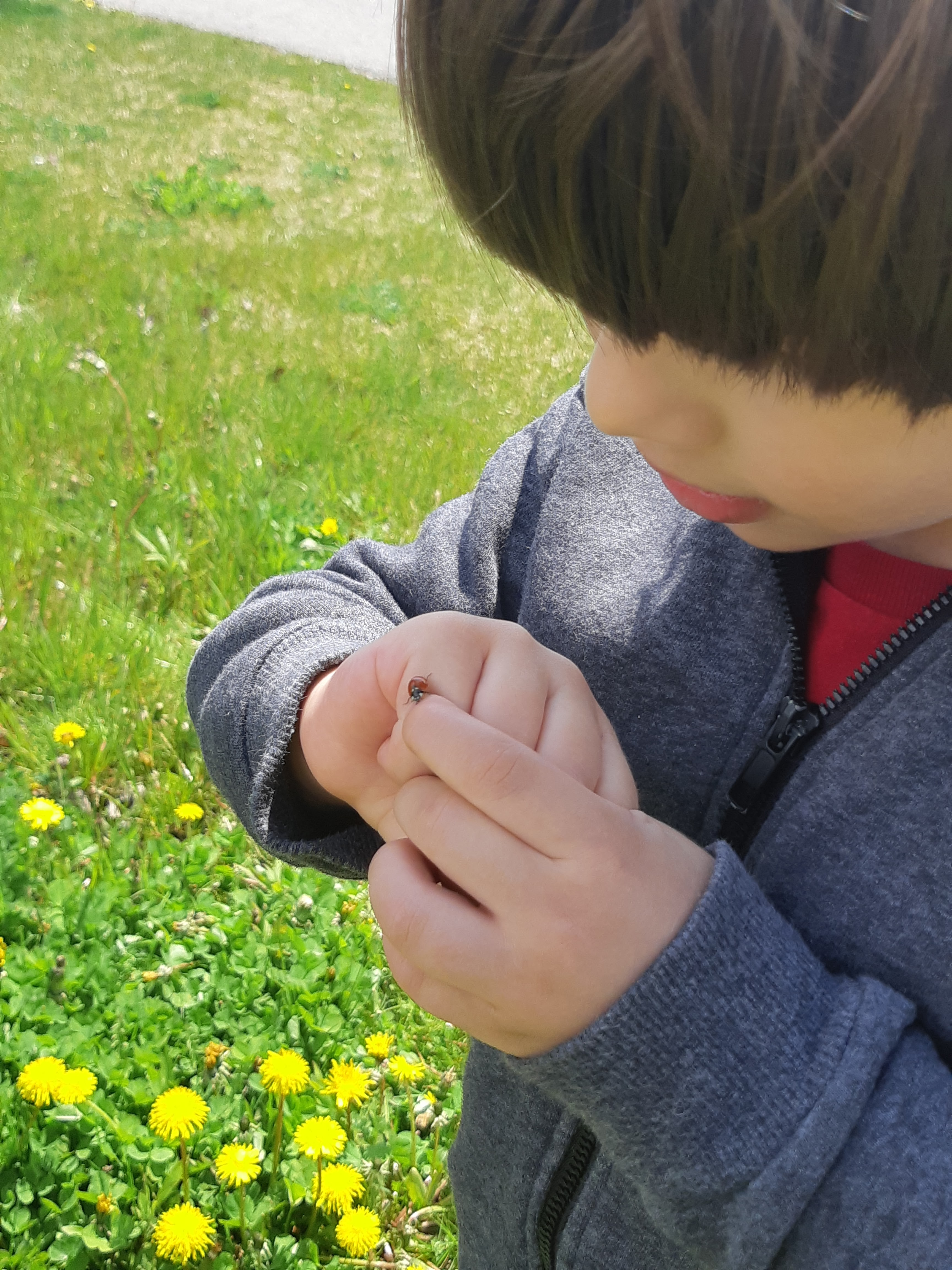 On one of our weekly outings to catch some sun during the lockdown in a park that would usually be full, my younger brother managed to get a ladybug to pose on one of his fingers and I decided to take a picture of this moment.