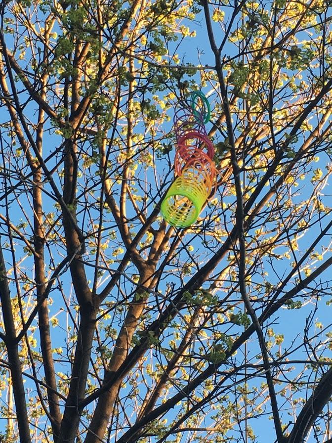 Photo of a rainbow slinky in an autumn tree