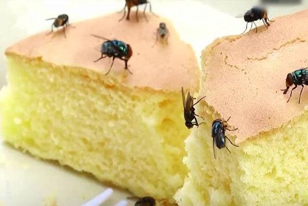 Diệt ruồi như thế nào hiệu quả ? Máy bắt ruồi nào tốt ?