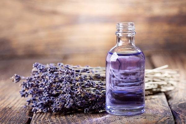 Mùi hương của oải hương có thể xua đuổi ruồi