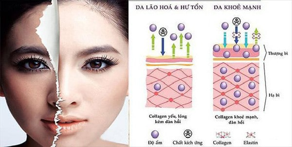 Tác dụng của collagen đối với làn da