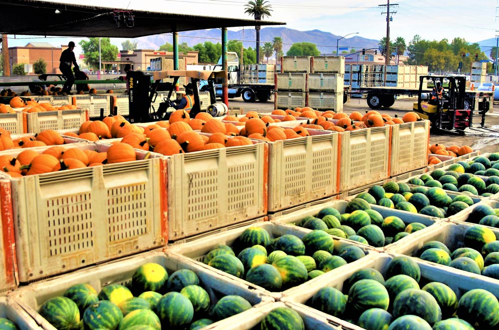 Harvested Pumpkins and Watermelons in boxes