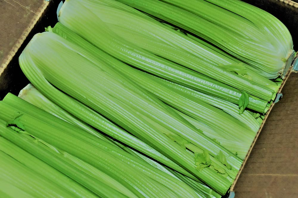 A box of Celery stalks