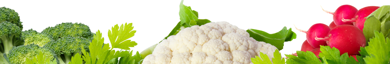 An arrangement of Brocolli, Cauliflower, radishes and cilantro