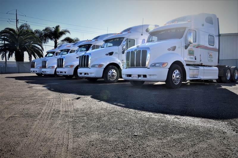 Fleet of Rancho Nuevo Harvesting, Trucks