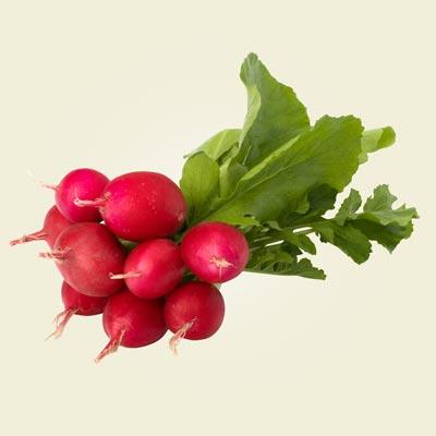 What we harvest: Radishes