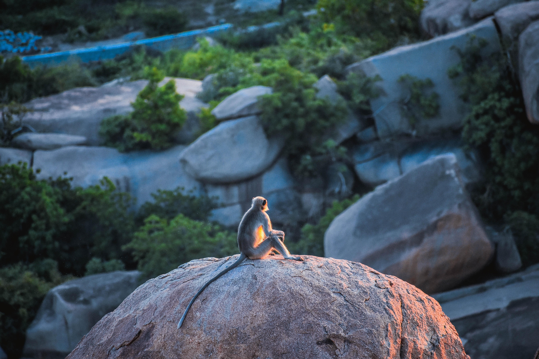 A monkey sits on top of a rock. Photo courtesy of Vivek Sharma on Unsplash.