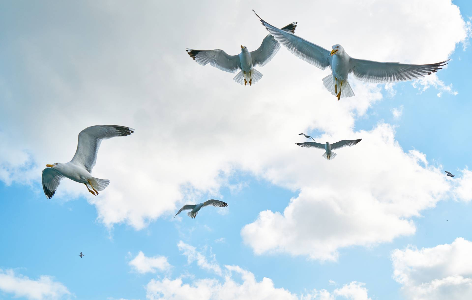 Seagulls flying through a cloudy blue sky. Photo courtesy of Engin Akyurt from Pexels.
