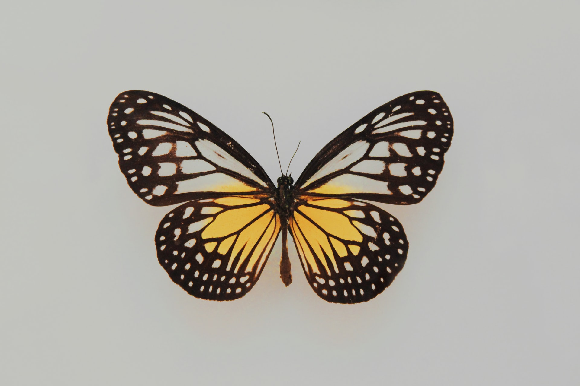 Butterfly with yellow on its wings. Photo courtesy of Fleur on Unsplash.