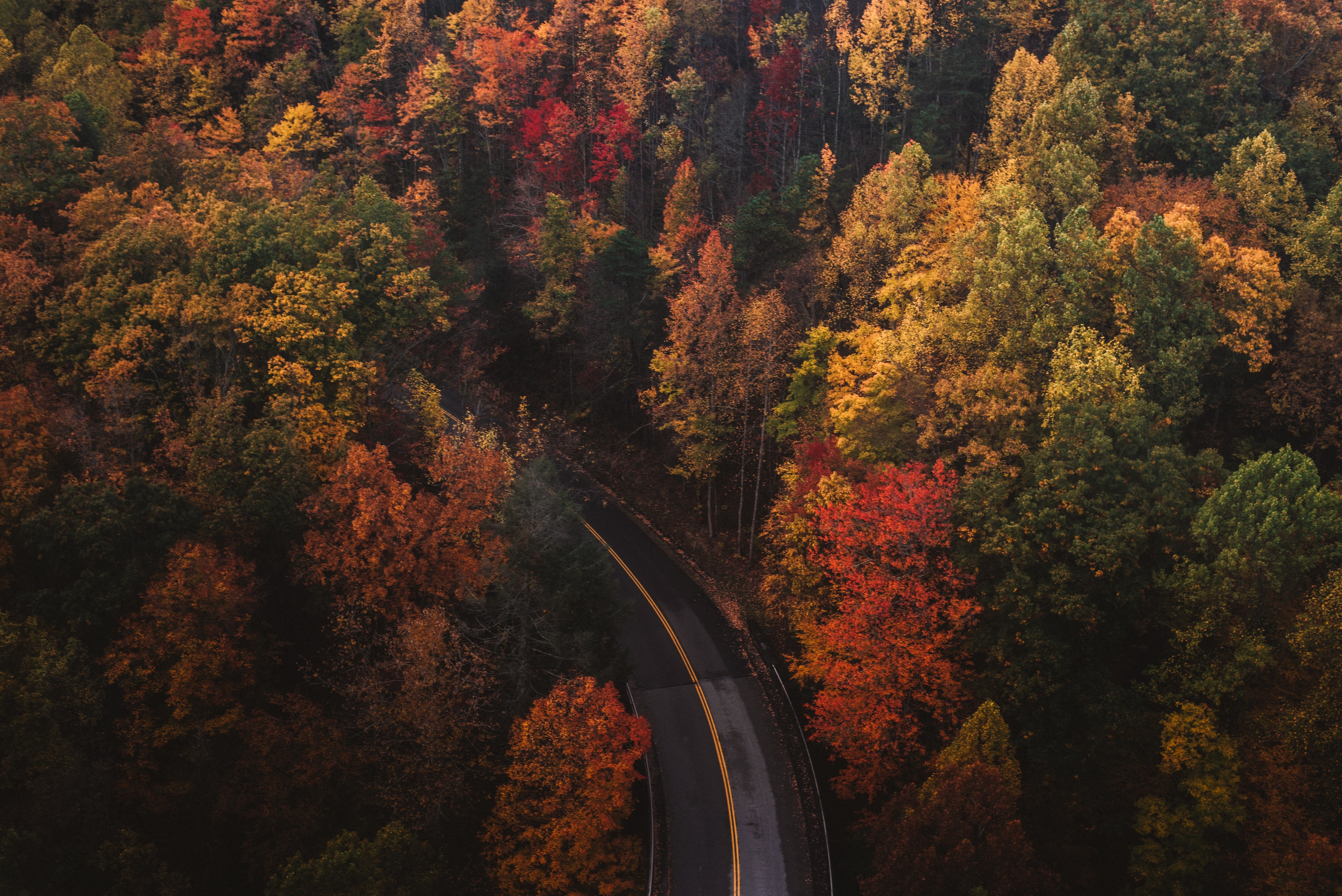 Overhead photo of a road winding through trees with red, orange and yellow leaves. Photo courtesy of Chad Madden on Unsplash.