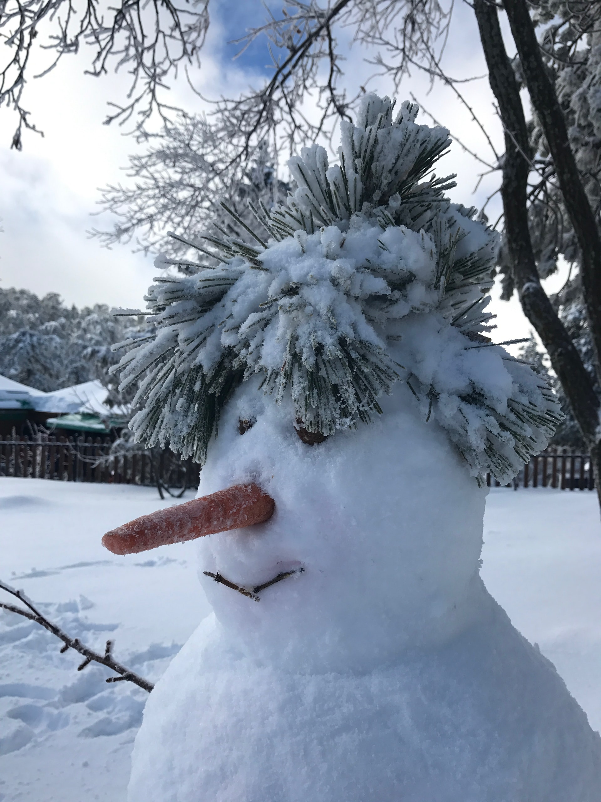 A snowman with snow-covered pine branches for hair. Photo courtesy of Andreas Avgousti on Unsplash.