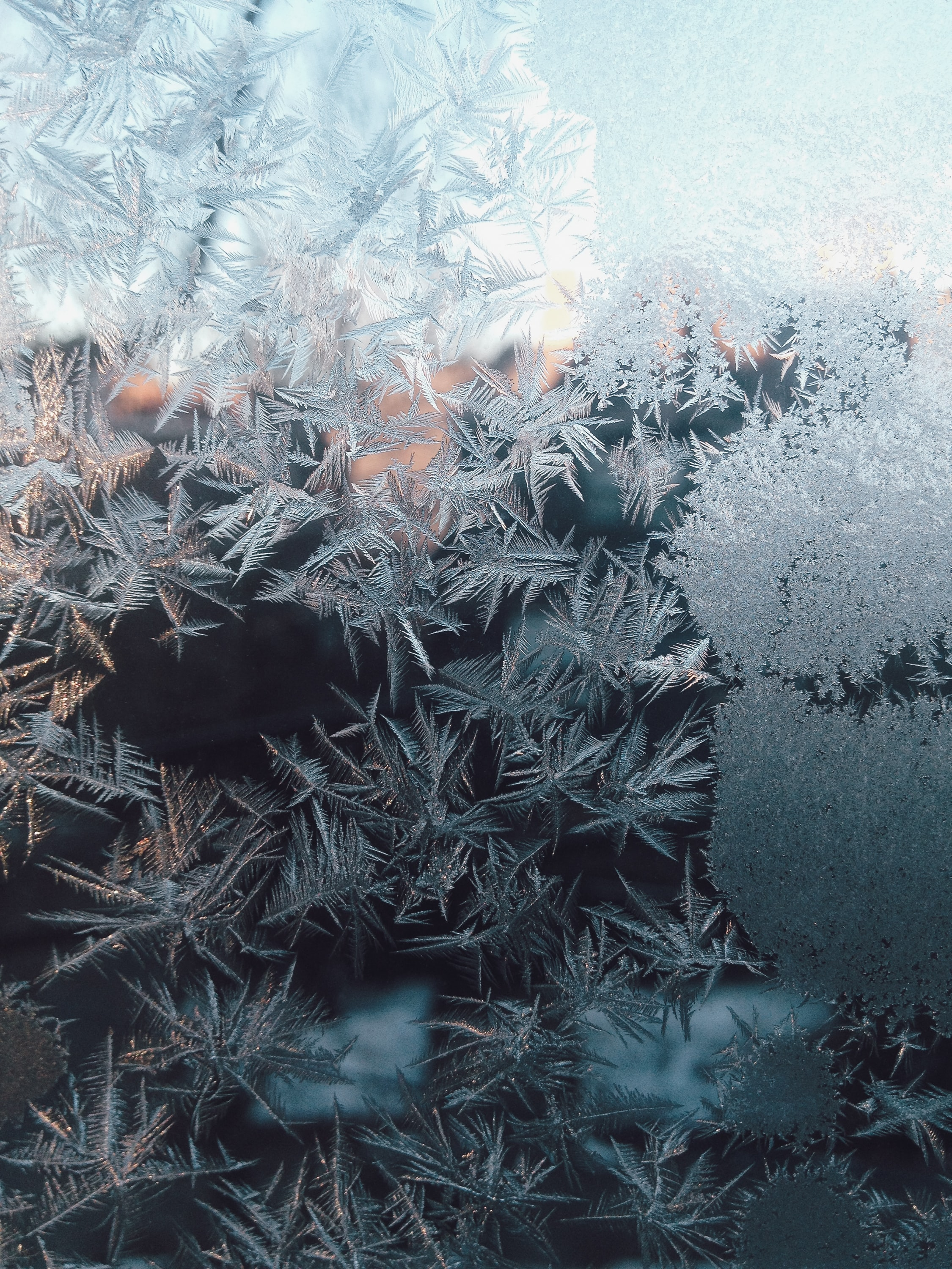 Photo of frosted leaves. Image courtesy of Kelly Sikkema via Unsplash.