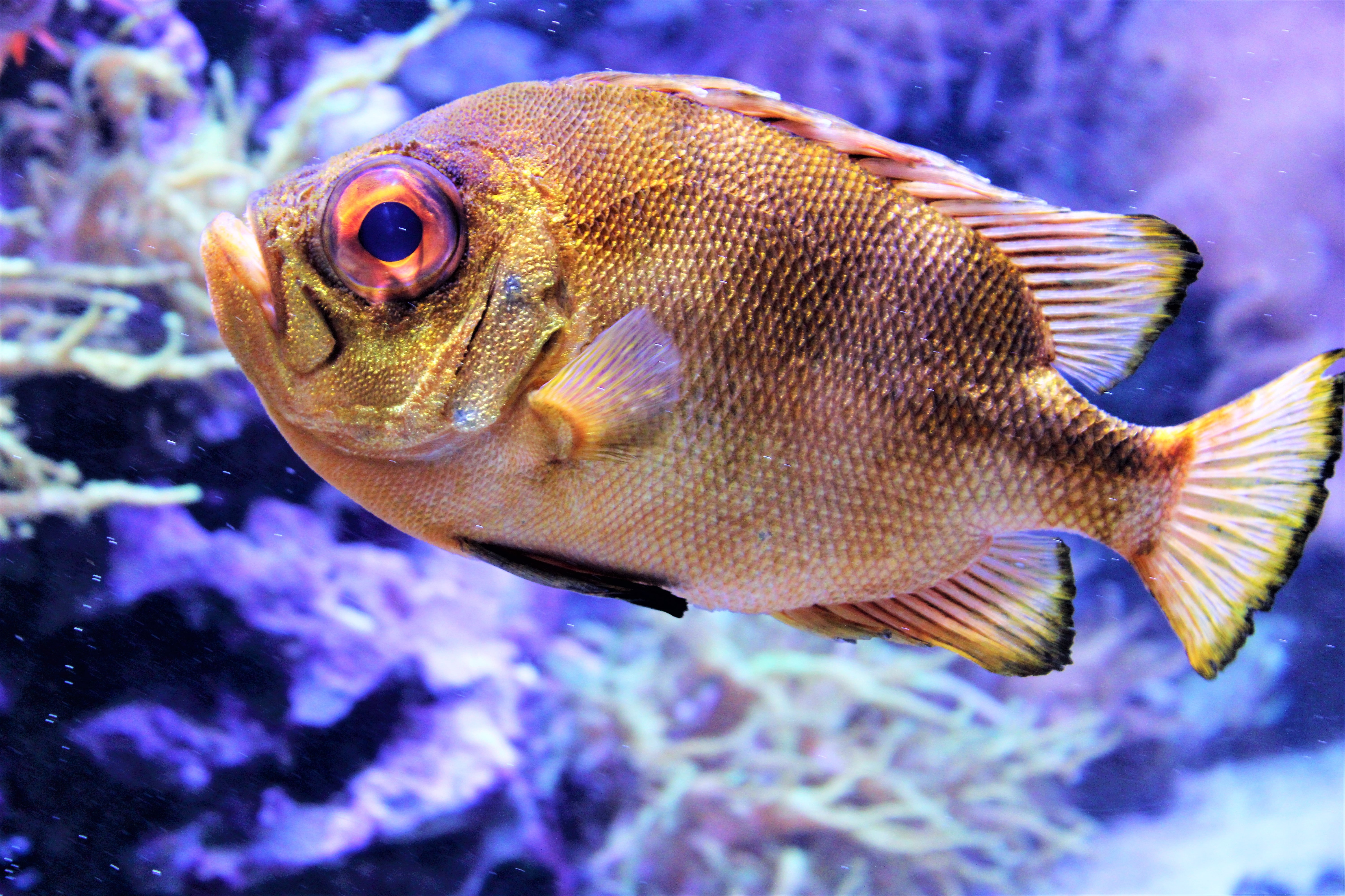 A scaly brown fish, photo courtesy of Mika Brandt on Unsplash.