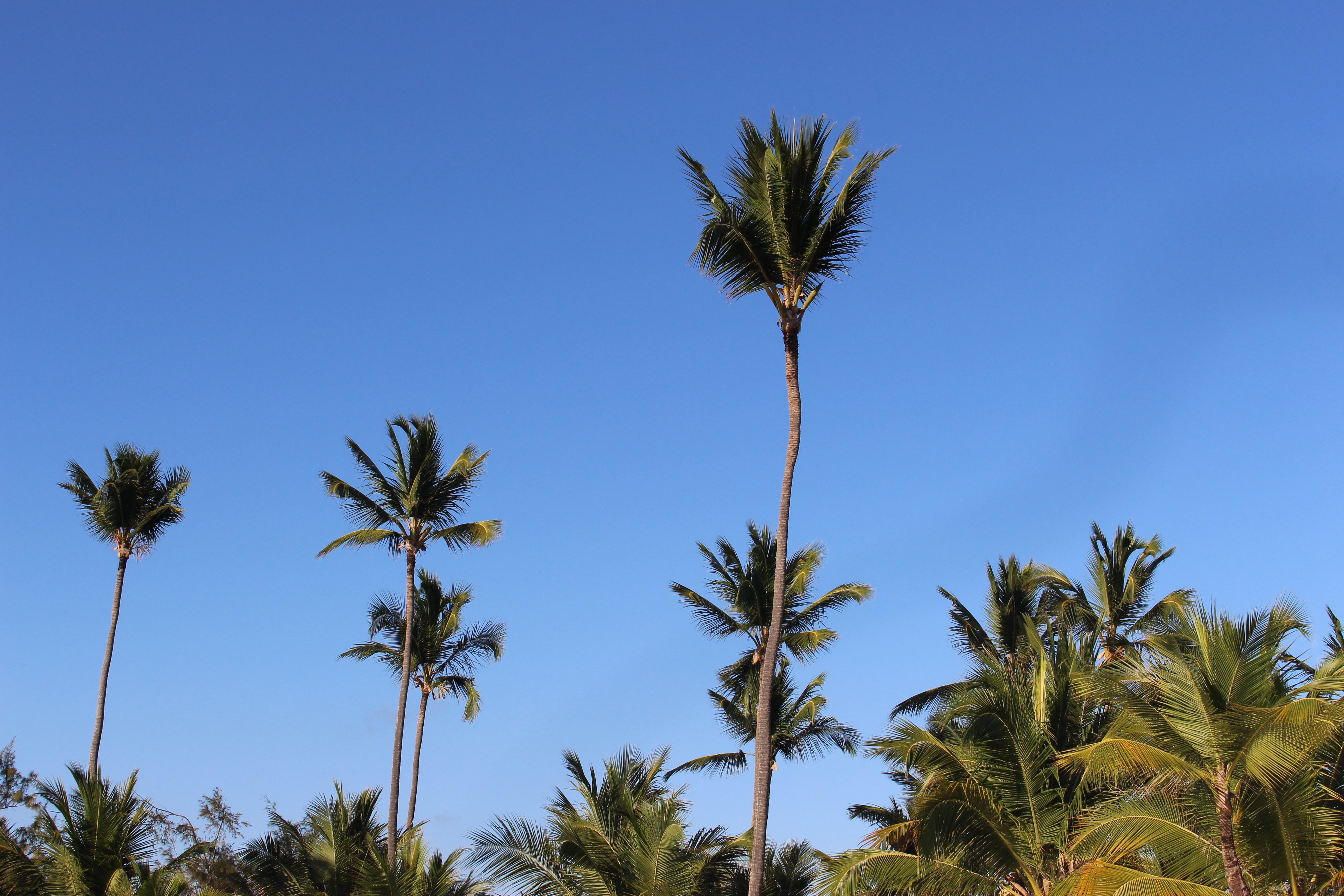 Photo of palm trees swaying against a clear blue sky. Image courtesy of Kapil Sharma via Unsplash.