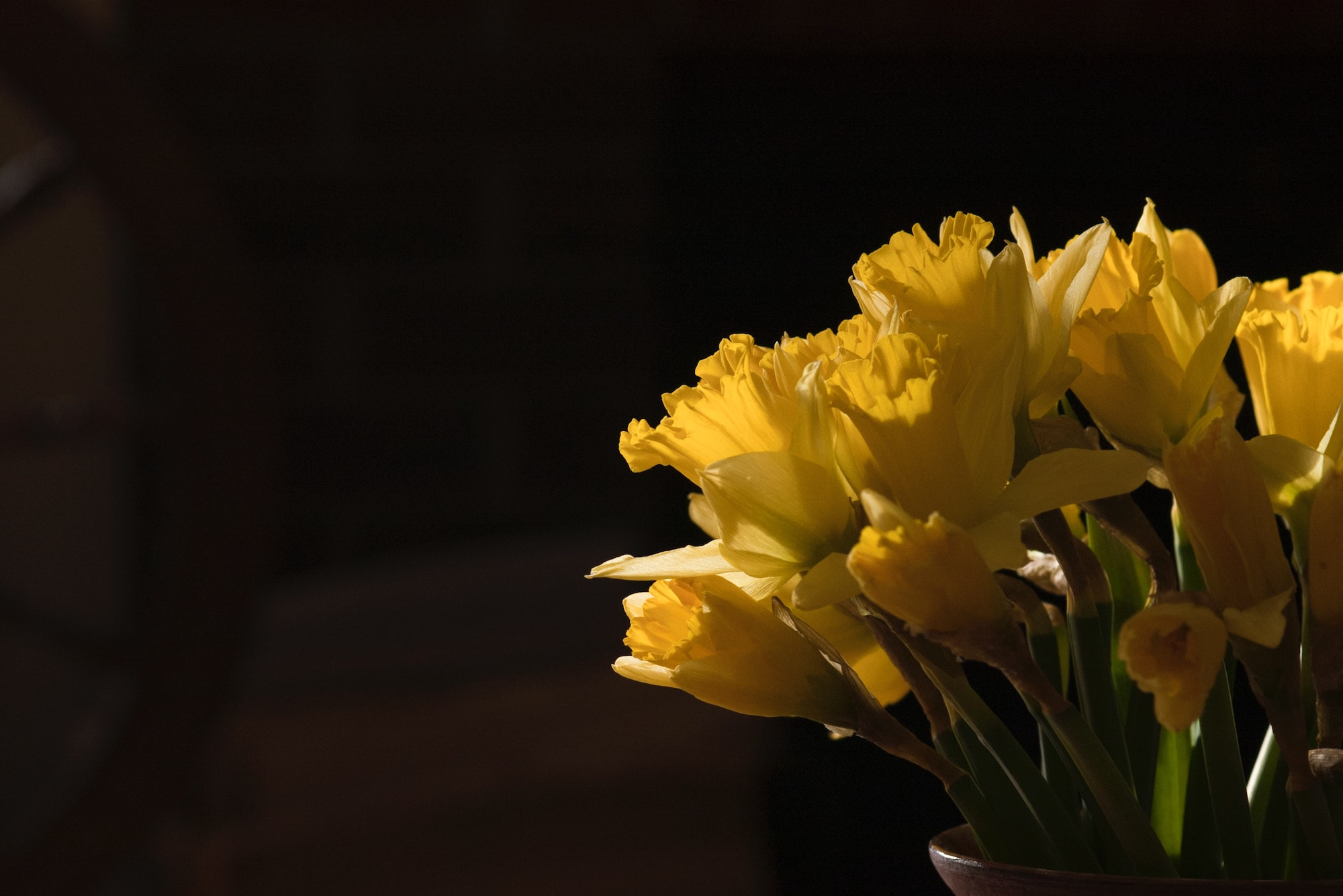 A bouquet of yellow narcissus flowers. Photo courtesy of Oxana Lyashenko on Unsplash.