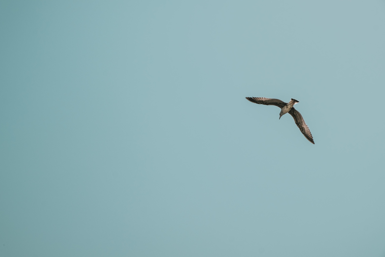 Photo of a brown bird flying against a blue sky. Image courtesy of Ilnur Kalimullin via Unsplash.