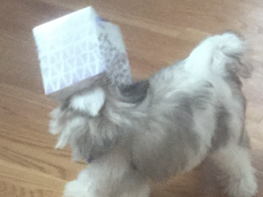 The author's pet got his head stuck in a Kleenex tissue box. Photo courtesy of the author.